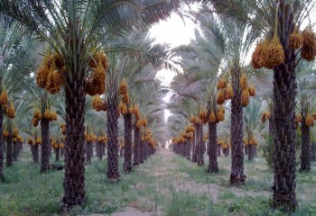 شهرستان تنگستان